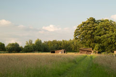 Wooden Farm Sheds in Field Stock Photography