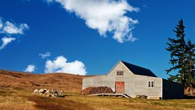 A Wooden Farmhouse on grassland with Alpaca by the Royalty Free Stock Photography
