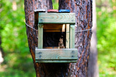 Wooden feeder for birds and squirrels Stock Photo