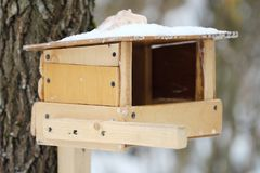 Wooden feeder on the tree for birds in the forest. View Royalty Free Stock Image