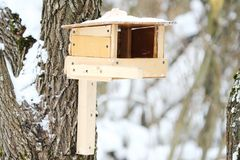 Wooden feeder on the tree for birds in the forest. View Stock Photography