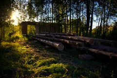 Wooden felling in the wood, logs lie nearby. Decline. Stock Photography