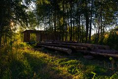 Wooden felling in the wood, logs lie nearby. Decline. Royalty Free Stock Image