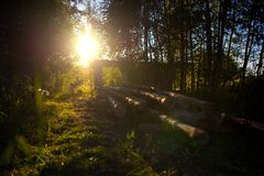 Wooden felling in the wood, logs lie nearby. Decline. Stock Photo