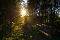 Wooden felling in the wood, logs lie nearby. Decline. Stock Image
