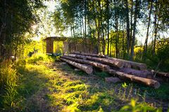 Wooden felling in the wood, logs lie nearby. Decline. Stock Images