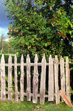 Wooden fence. And tree with red fruits royalty free stock photos