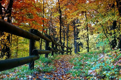 Wooden fence. At the wayside in the fall forest Royalty Free Stock Images