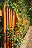 Wooden fence. Orange wooden fence with green leaves and twigs Stock Photography