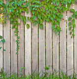 Wooden fence. Plant growth on wooden fence royalty free stock images