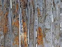 Wooden fence. Old wooden fence with wood worm traces Stock Photos