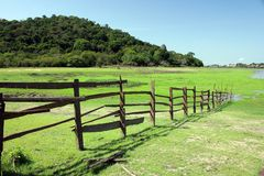 Wooden fence. Rural wooden fence with the amazon forest - Amazonia - Brazil stock photos