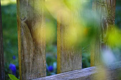 Wooden fence abstract scenery at spring Royalty Free Stock Image