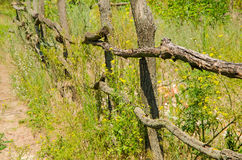 Wooden fence along the road in the countryside. An old wooden fence in rural area in summer Royalty Free Stock Images