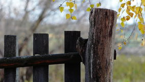 Wooden Fence stock footage