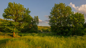 Wooden fence in the background of the meadow Stock Photo