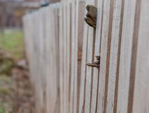 Wooden fence background. Stack of new wooden studs at the lumber yard Royalty Free Stock Photos