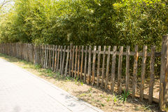 The wooden fence, bamboo leaves Stock Photos