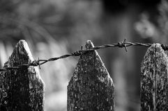 Wooden fence with barbwire Stock Photo