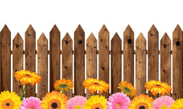 Wooden fence. Blooming colorful gerberas in the background wooden fence Stock Photos