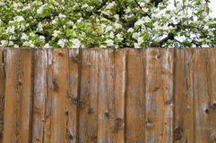 Wooden fence and blooming tree Stock Photos