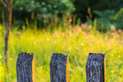 Wooden fence-blurred sunny garden Stock Image