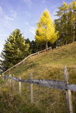 Wooden Fence Bordering Field in Alpine Forest. Scenic View of Old Wooden Fence Dividing Green Field on Side of Hill and Bordered by Thick Green Forest - Sun Stock Images