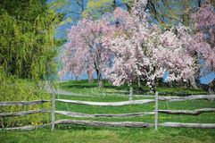 Wooden fence in the country Stock Image