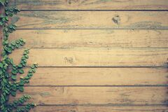 Wooden fence with creeper Royalty Free Stock Images