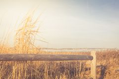 Wooden fence and dry grass in the sandy beach dunes Royalty Free Stock Photo