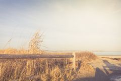 Wooden fence and dry grass in the sandy beach dunes Stock Photography