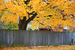 Wooden fence with fall colored leaves in the backg Royalty Free Stock Images