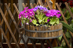 The wooden fence and flower pots. Street side fence and flower pots, beautify a city street Stock Photo