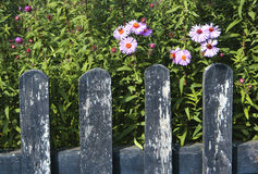 Wooden Fence and Flowers Royalty Free Stock Photos