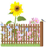 Wooden fence, flowers and blue tit. Wooden fence and sunflower, cosmea, cornflower and garden daisy flowers, blue tit Stock Photo