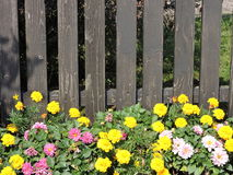 Wooden fence and flowers Royalty Free Stock Image
