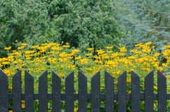 Wooden fence and flowers Royalty Free Stock Photography