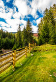 Wooden fence in forest camping place Stock Photography