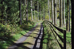 Wooden fence in a forestry stock image
