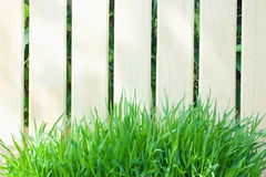Wooden fence and fresh green grass. In sunny day Royalty Free Stock Photo