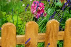 Wooden fence in garden Royalty Free Stock Photos