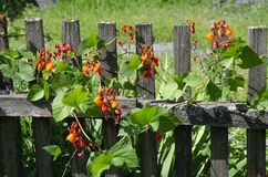 Wooden fence in Garden stock photos