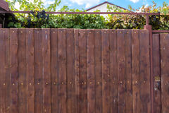 Wooden fence and grape garden Royalty Free Stock Image