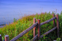 Wooden fence on the grass. This is a piece of sea grass, open purple flowers, a wooden fence through the middle, in the sunset is very beautiful Royalty Free Stock Photo