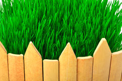Wooden fence and green grass Royalty Free Stock Photo