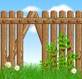 Wooden fence on green grass with daisy. Against the sky Stock Image