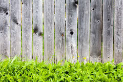 Wooden fence and green grass. Spring Or Summer Background Royalty Free Stock Photo