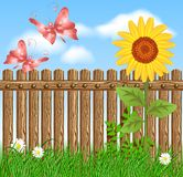 Wooden fence on green grass with sunflower. Against the sky Royalty Free Stock Photography
