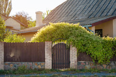 Wooden fence with green lawn and climbing plants. Royalty Free Stock Photo