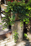 The wooden fence, green leaves Stock Photo